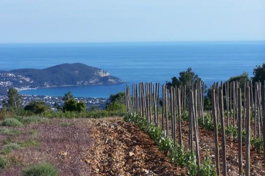 vignoble-vin-bandol-provence-var